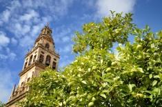 Zitronen vor der Mezquita (Córdoba)
